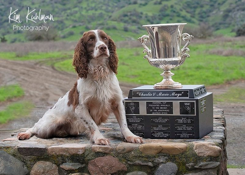 English Springer Spaniel field trial Dawsonlee Faithful Sam Jeff Miller Mayo Trophy
